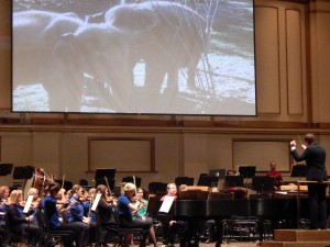 The Saint Louis Zoo provided very cool videos of animals to accompany the orchestra. Elephants!