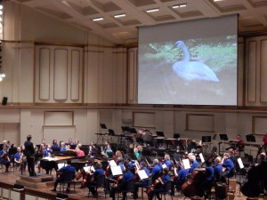 """Principal Cello Daniel Lee plays """"The Swan"""" while a swan glides across the screen."""