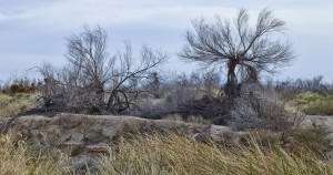 Amargosa wetland. Photo by Deborah O'Grady.